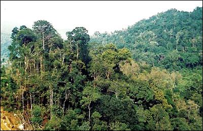 اجمل غابات استوائية مطرية بالصين(صور) 159517.jpg
